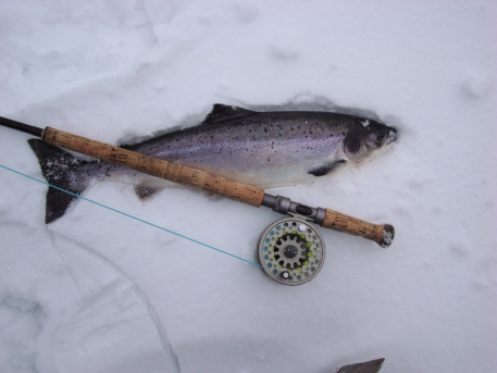 first fish of the season - fresh out from under the ice